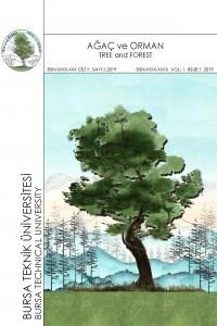 Ağaç ve Orman